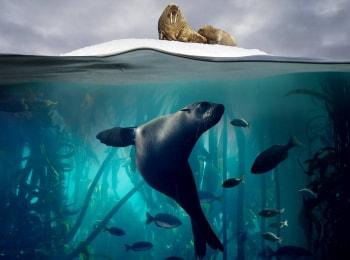 Голубая планета 2 Единый океан