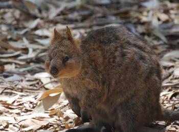Королевство кенгуру на острове Роттнест 1 серия