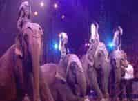 Международный фестиваль цирка в Монте-Карло